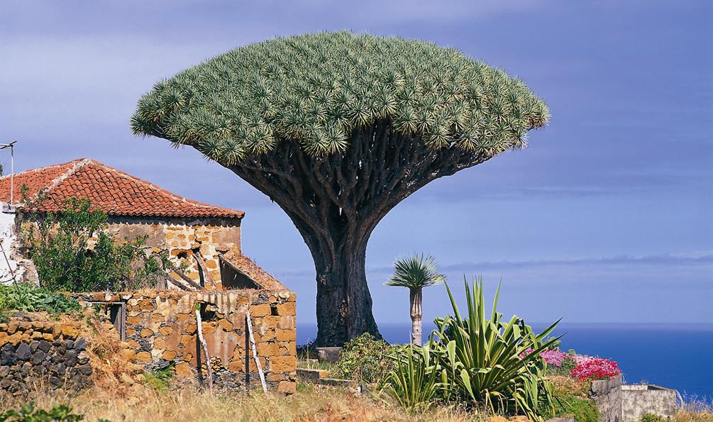 Kanaren-Kombi Teneriffa, La Palma und La Gomera